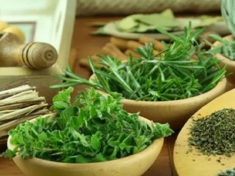 plantas medicinales para el tracto urinario